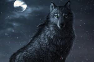 dark wolf wallpaper eyes