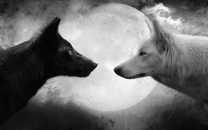 Wolf Wallpapers HD black and white