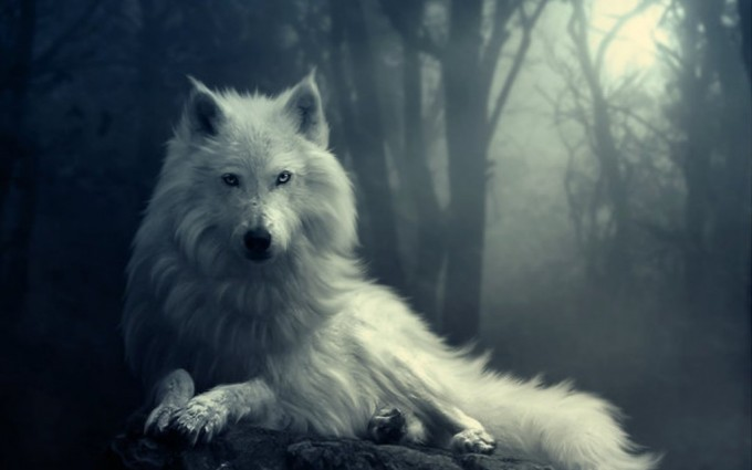 white wolf wallpapers HD