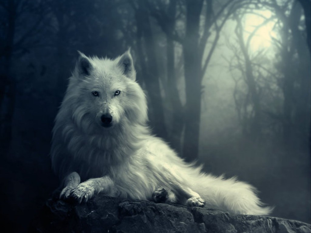 Wolf Wallpapers HD A41