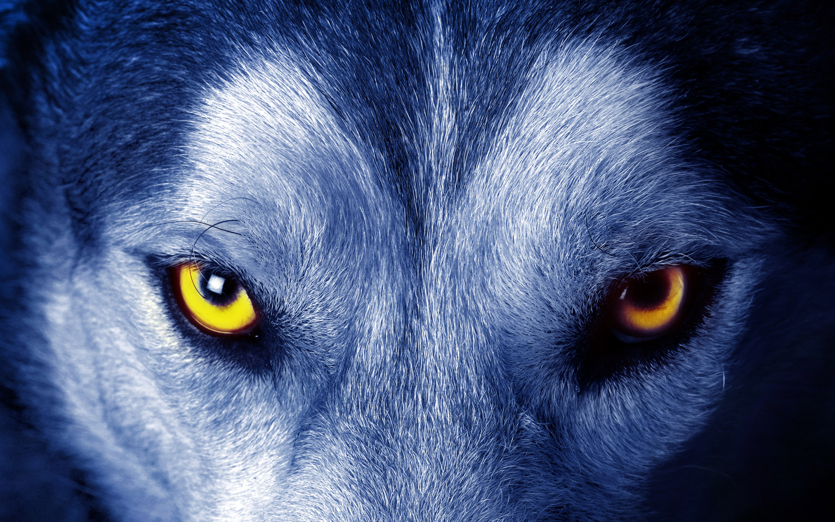 Wolf Wallpapers HD eyes