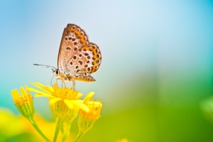 butterfly images wallpaper