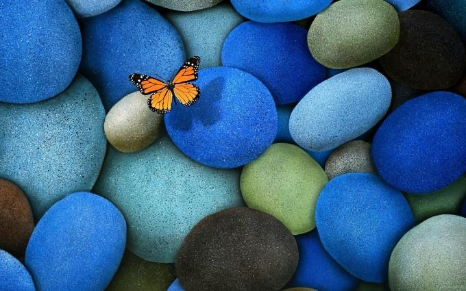 butterfly wallpaper blue pebbles