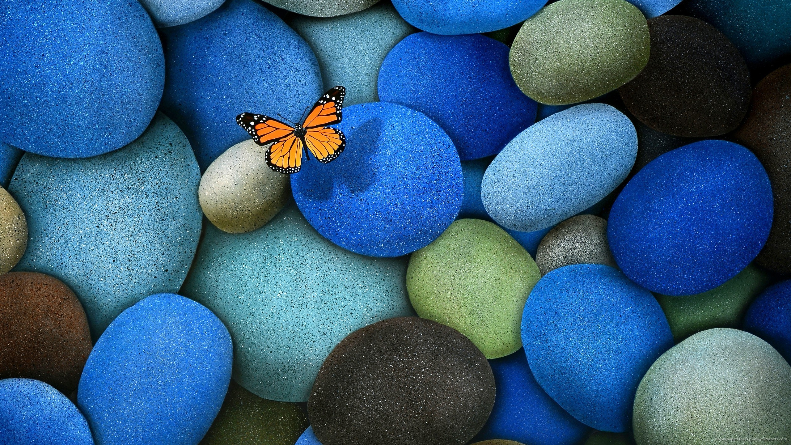 butterfly wallpaper blue pebbles