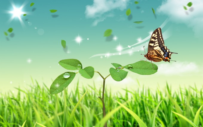 butterfly wallpaper green