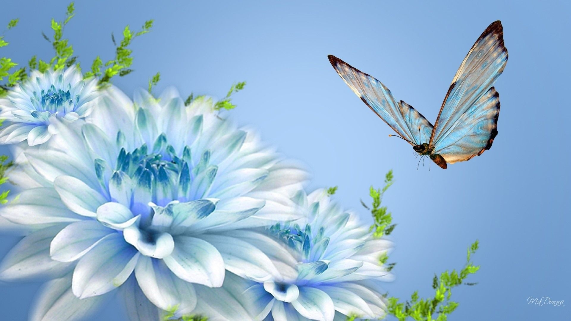butterfly wallpaper light blue