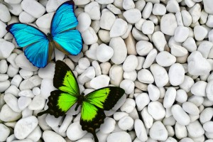 butterfly wallpaper pebbels