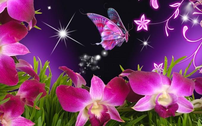 butterfly wallpaper pink