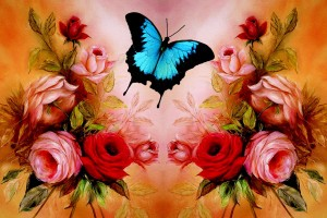 butterfly wallpaper red rose