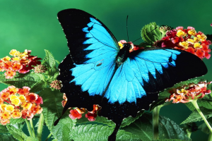 butterfly wallpaper spot blue