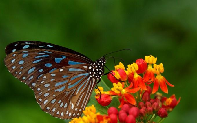 butterfly wallpaper spot blue dark