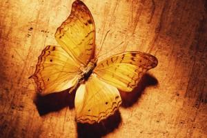 butterfly wallpaper yellow