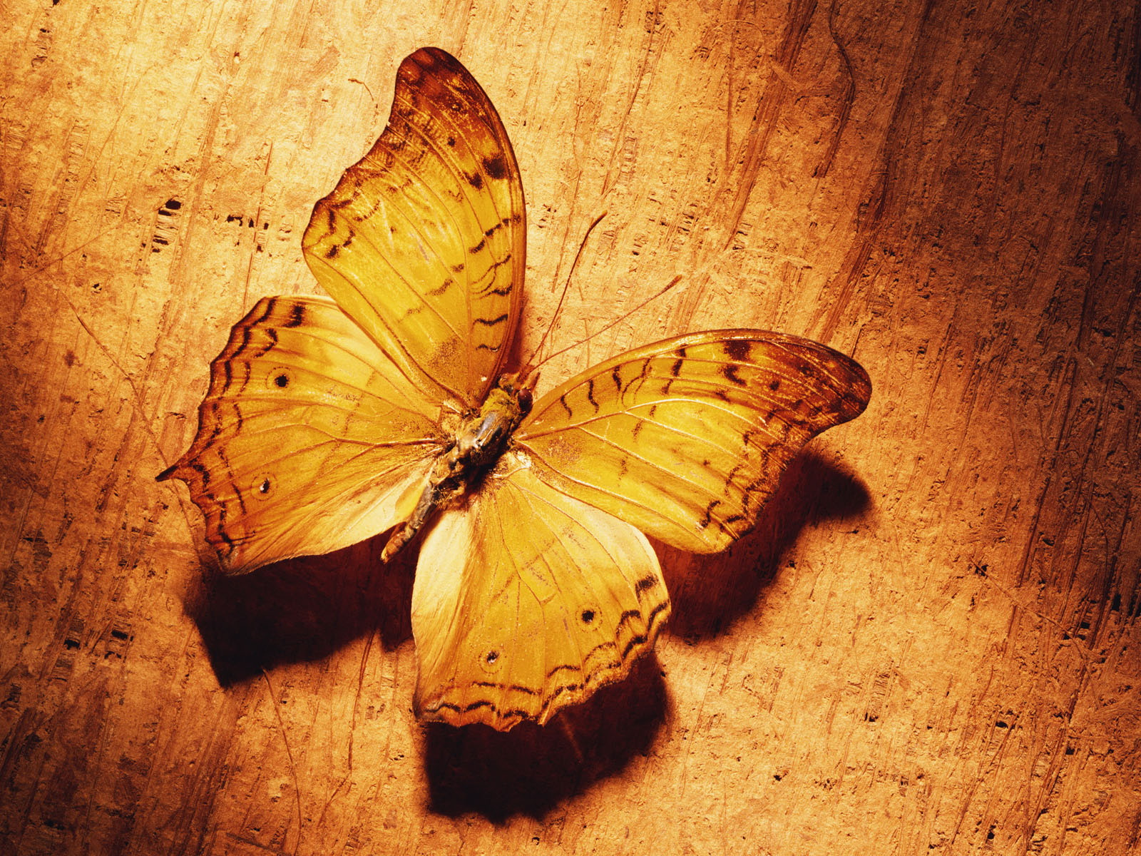 butterfly wallpaper yellow