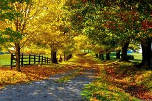 fall desktop wallpaper Autumn