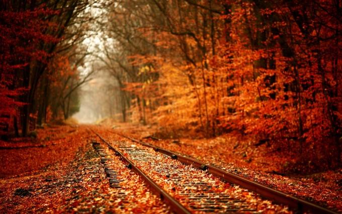 fall leaves wallpaper Autumn