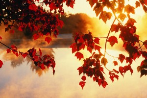 fall leaves wallpaper free Autumn