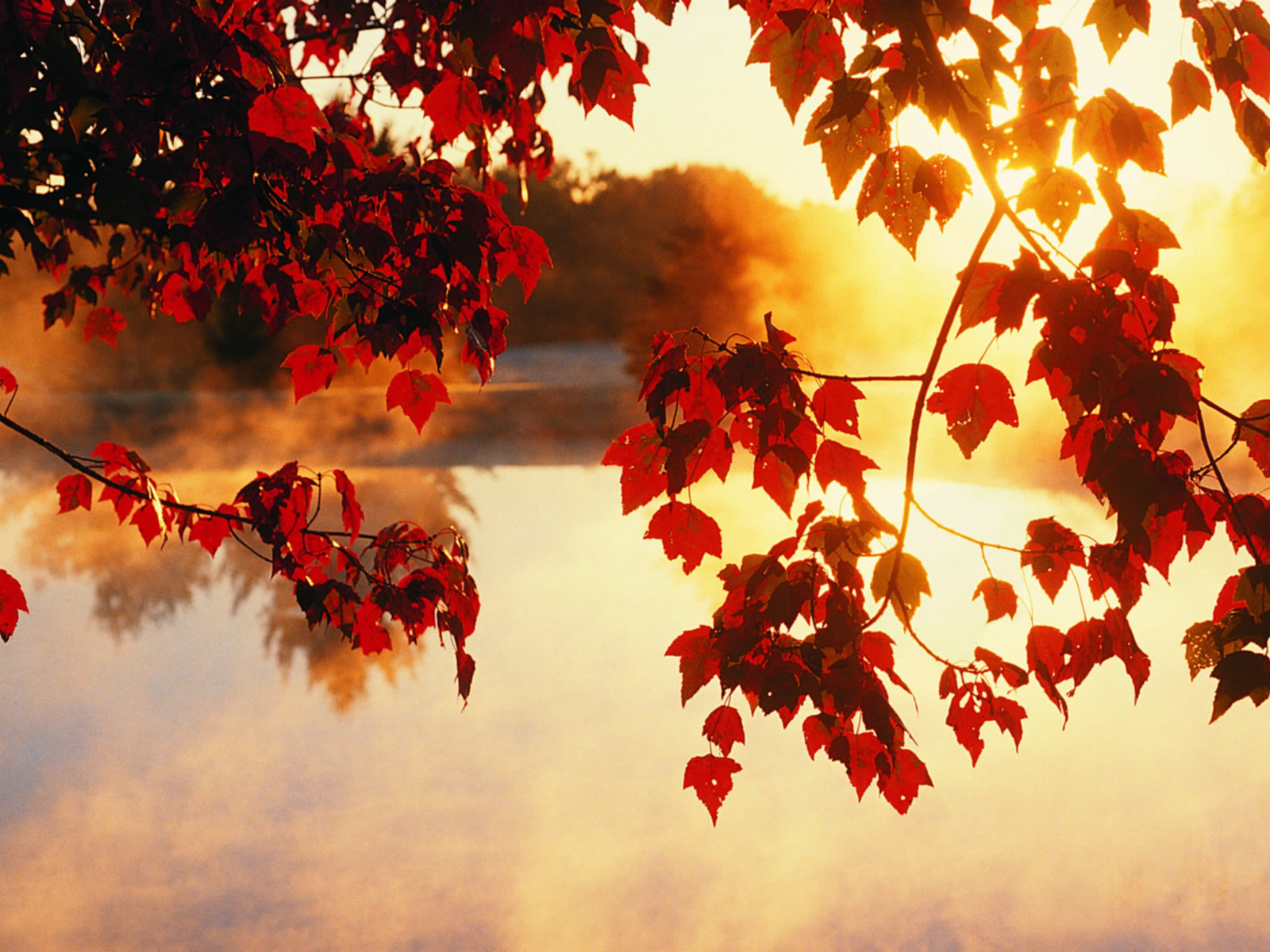 fall leaves wallpaper free Autumn