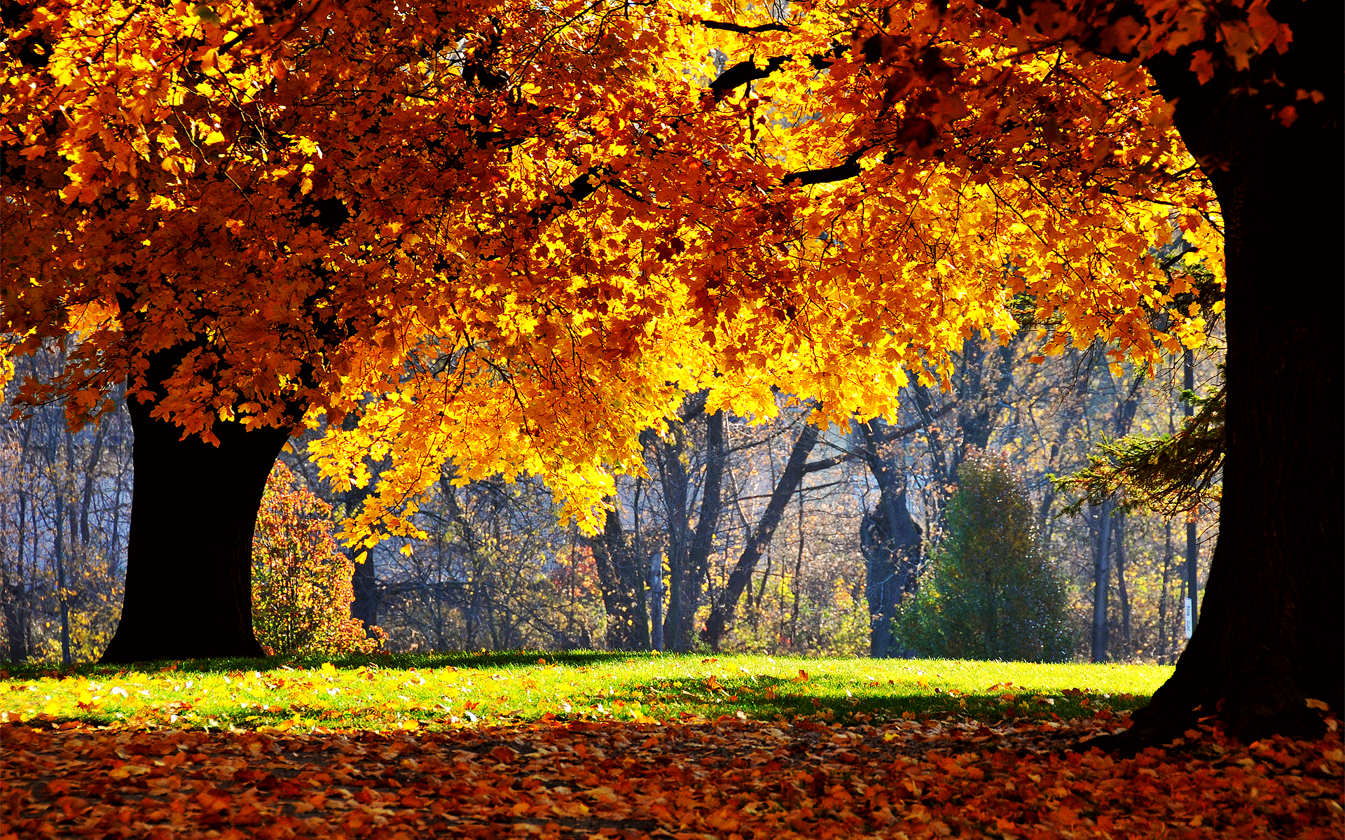 fall tree wallpapers