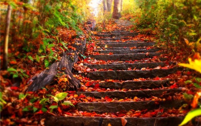 fall wallpaper free Autumn