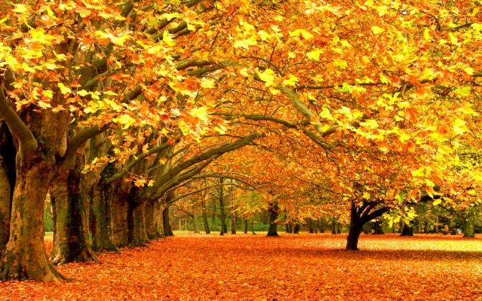 fall wallpapers awsome Autumn