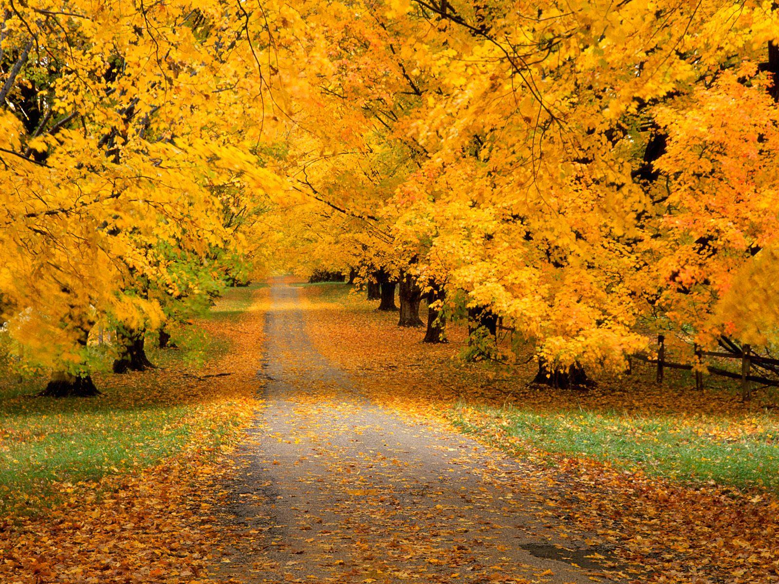 fall wallpapers beautiful Autumn