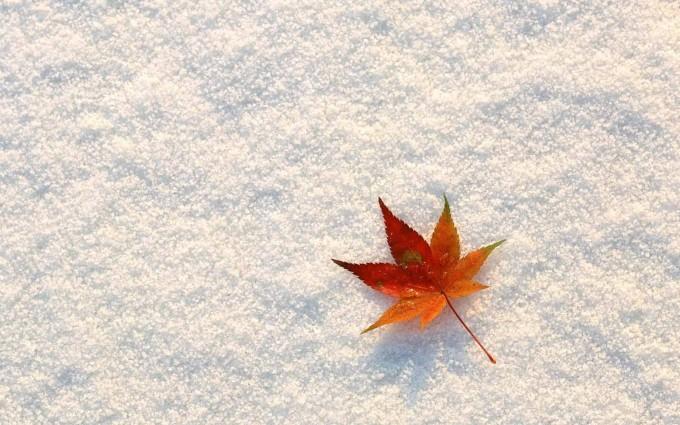 fall wallpapers cute Autumn