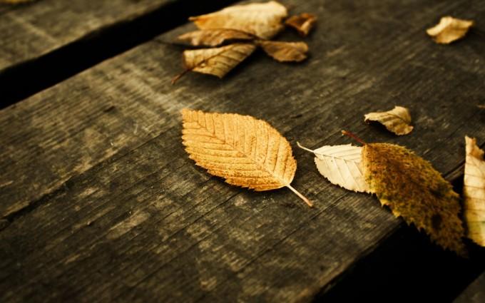 fall wallpapers dark Autumn