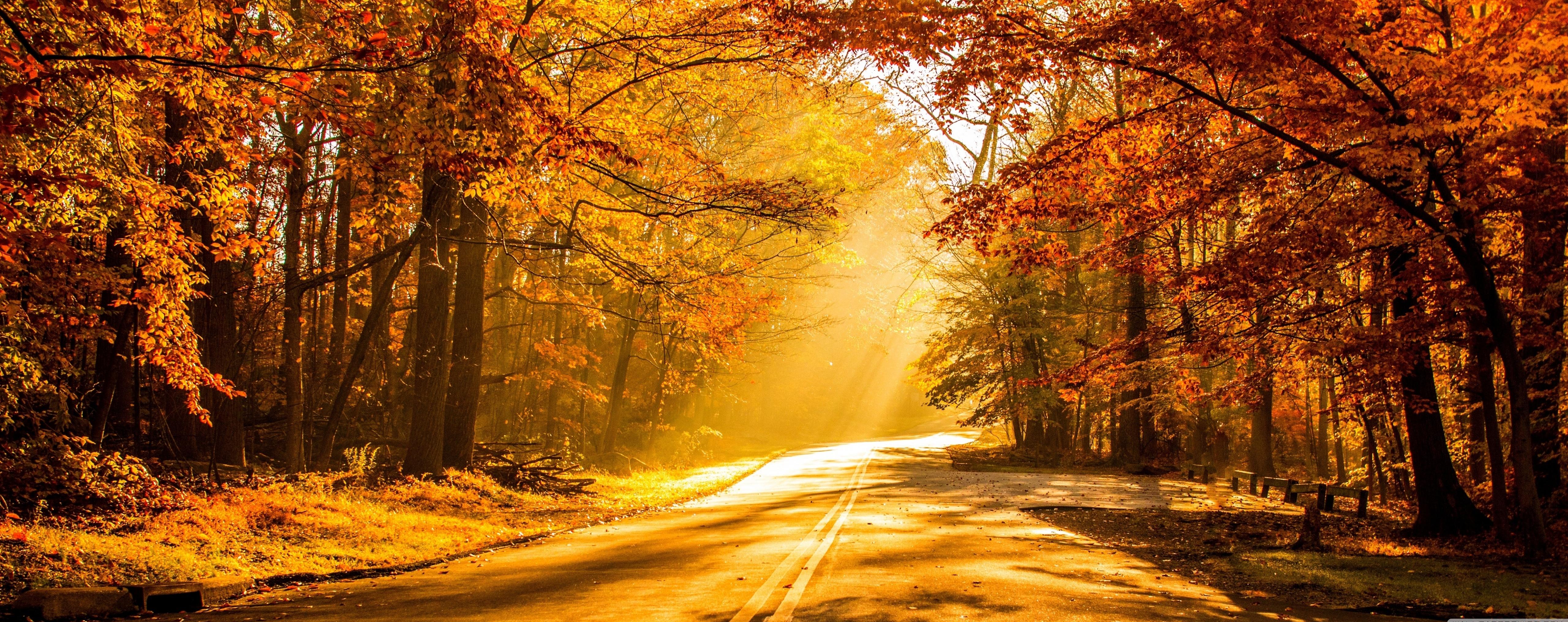 fall wallpapers golden Autumn