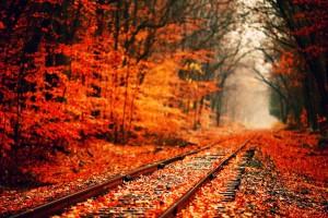 fall wallpapers rail track Autumn