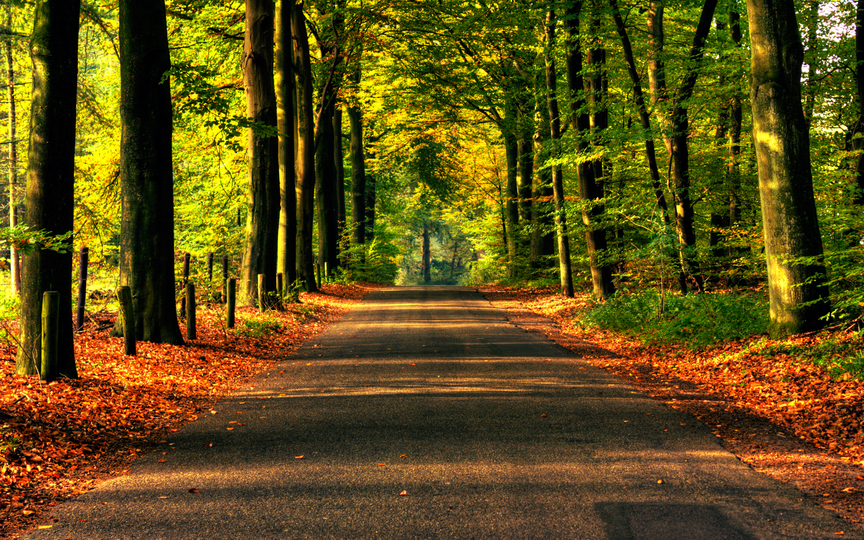 fall wallpapers road Autumn