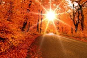fall wallpapers sunlight Autumn