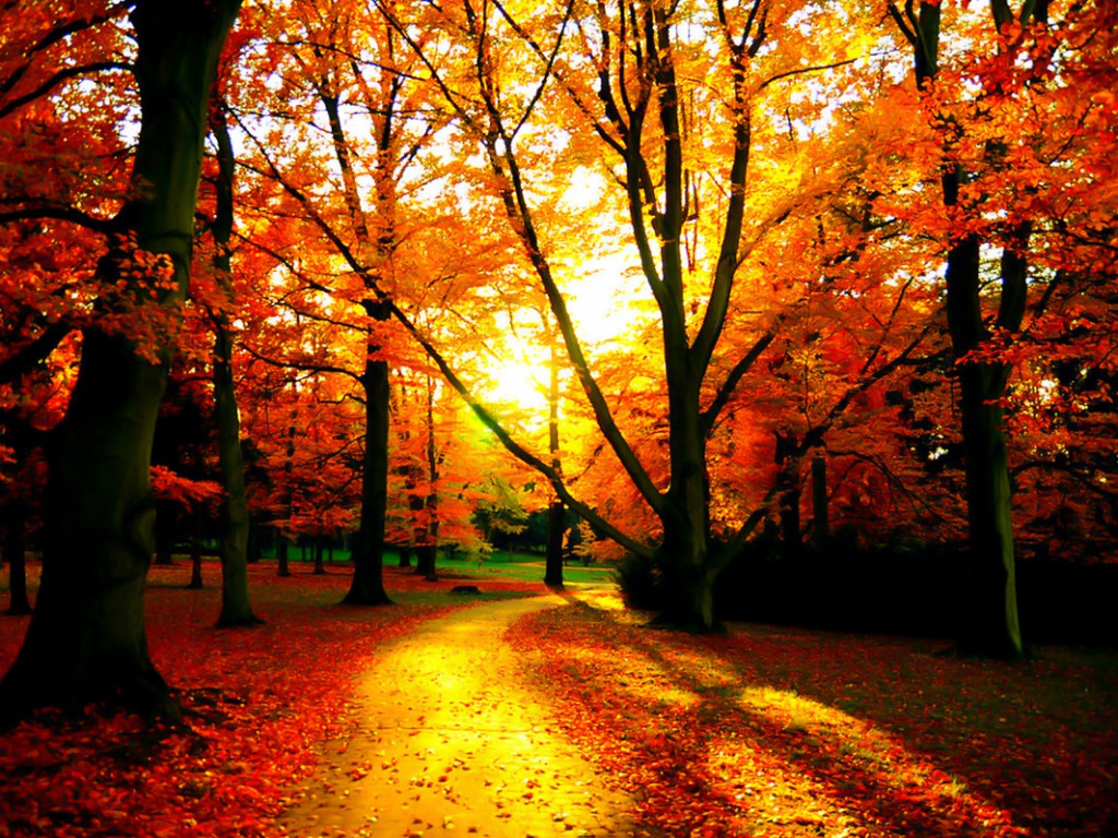 fall wallpapers sunshine Autumn