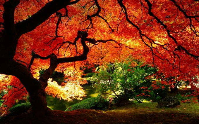 fall wallpapers trees Autumn