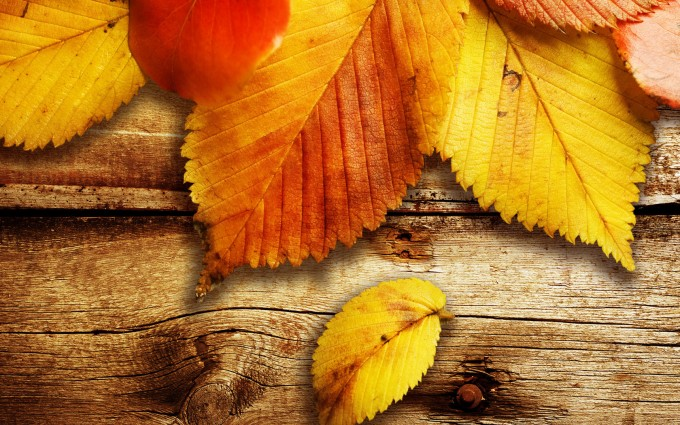 fall wallpapers wood Autumn