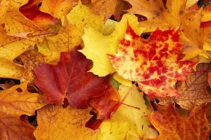 fall wallpapers yellow leaves Autumn