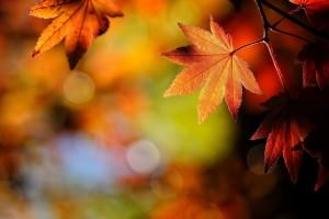 free fall wallpaper for desktop Autumn