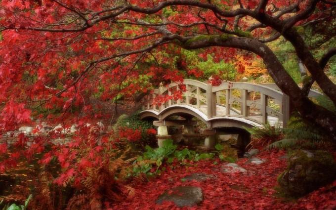 free wallpaper fall season Autumn