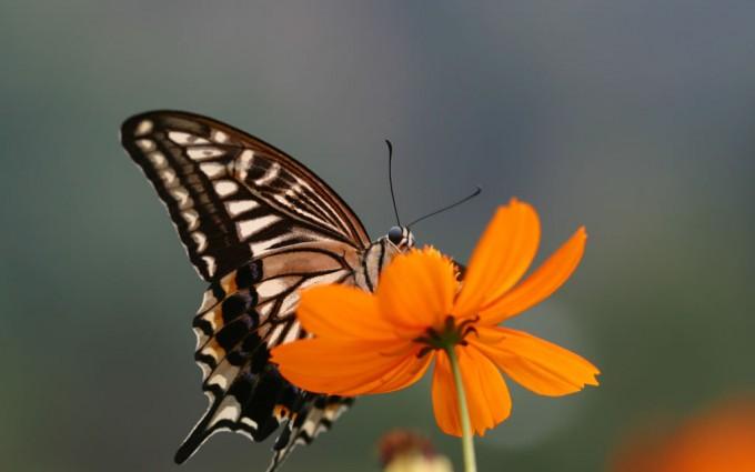 hd butterfly wallpaper