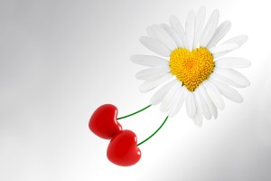 heart wallpapers Daisy Cherry Love