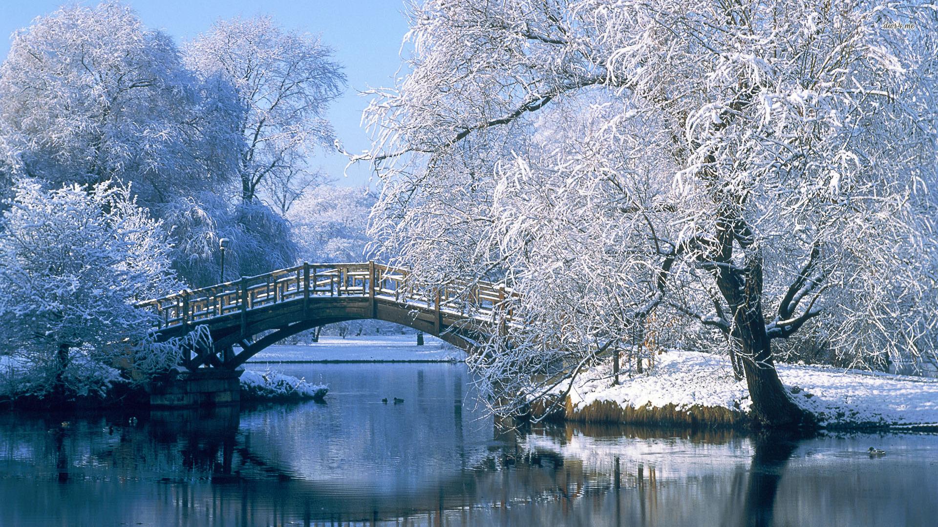beautiful trees wallpaper winter