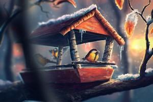 bird wallpaper cute