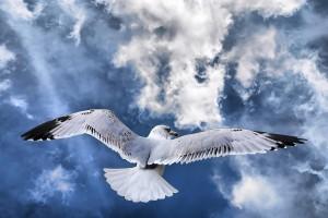bird wallpaper seagull