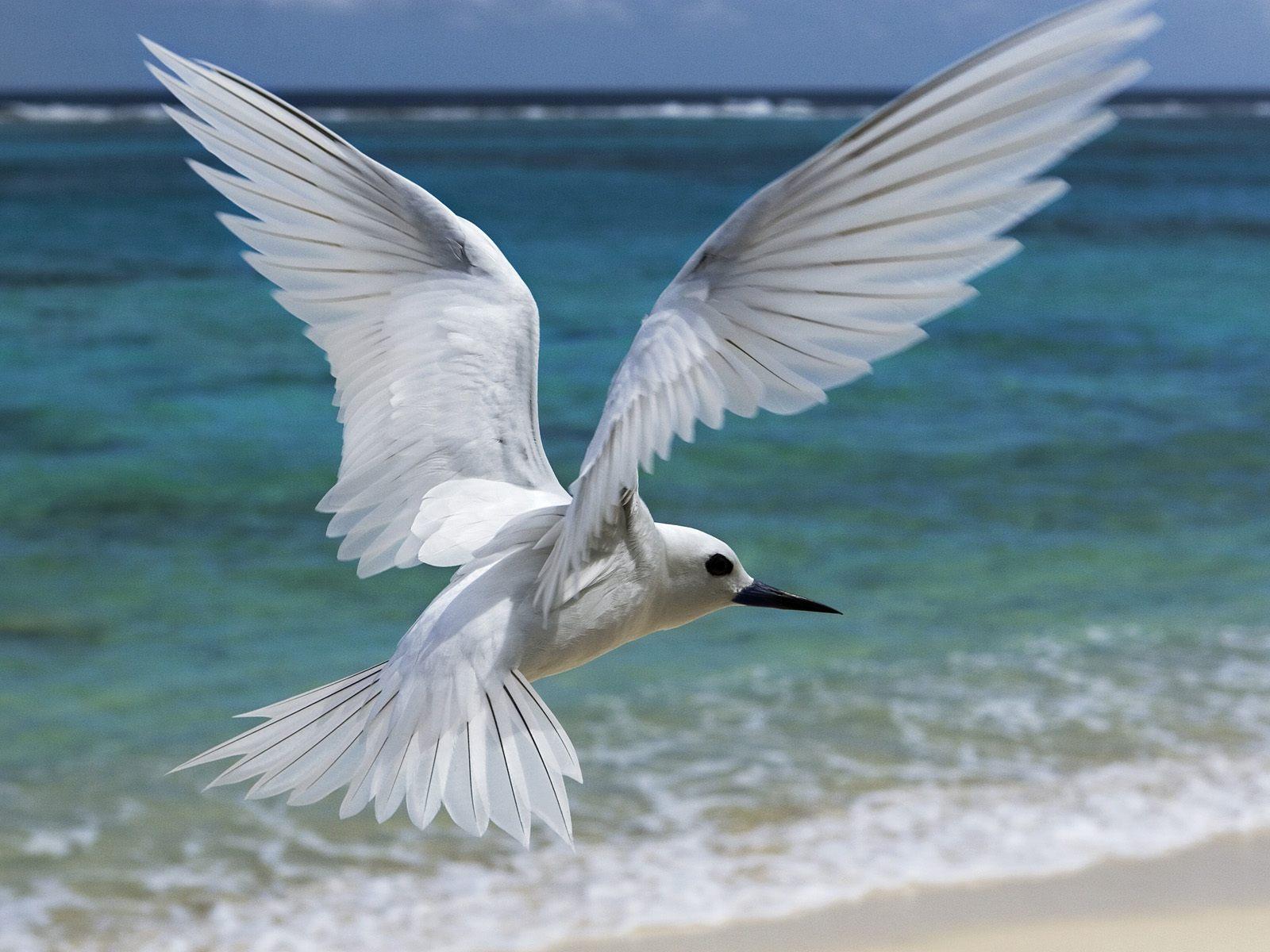 bird wallpaper white