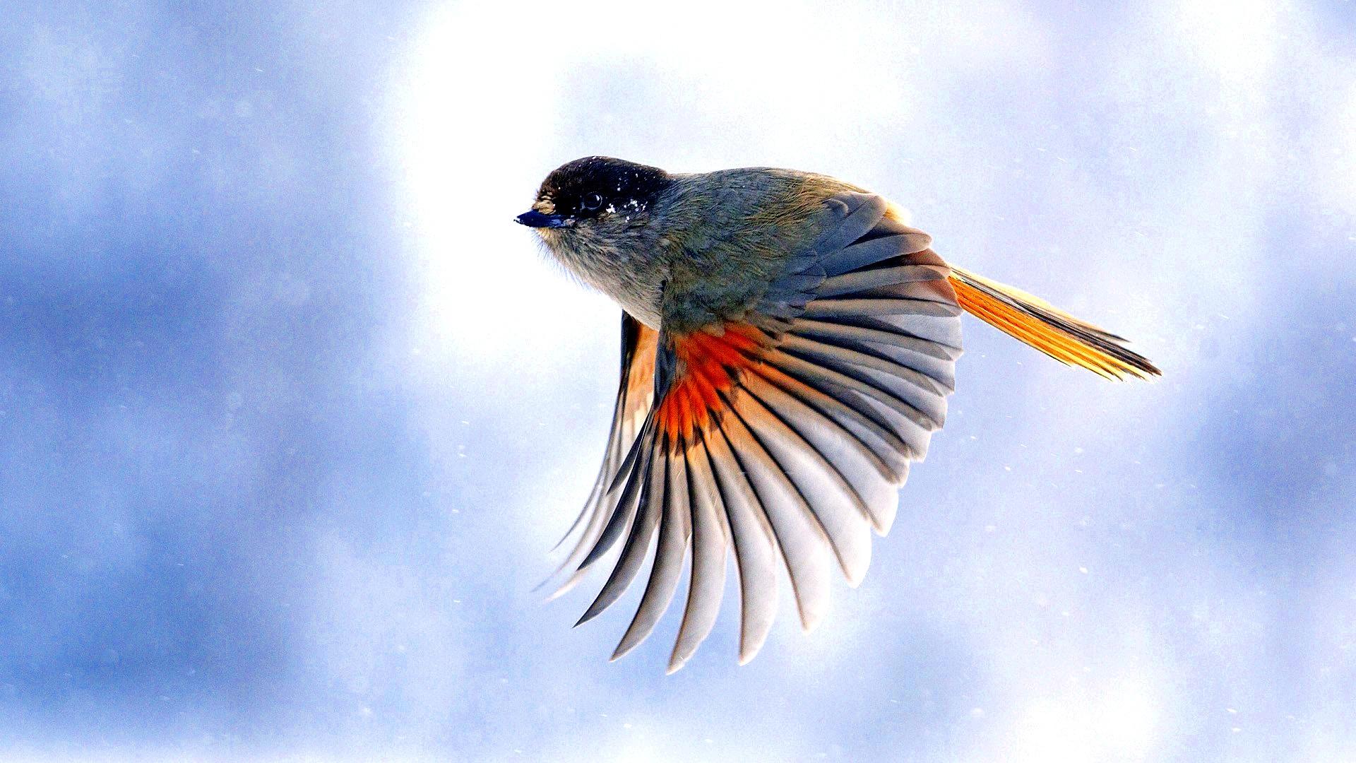 birds wallpapers stunning