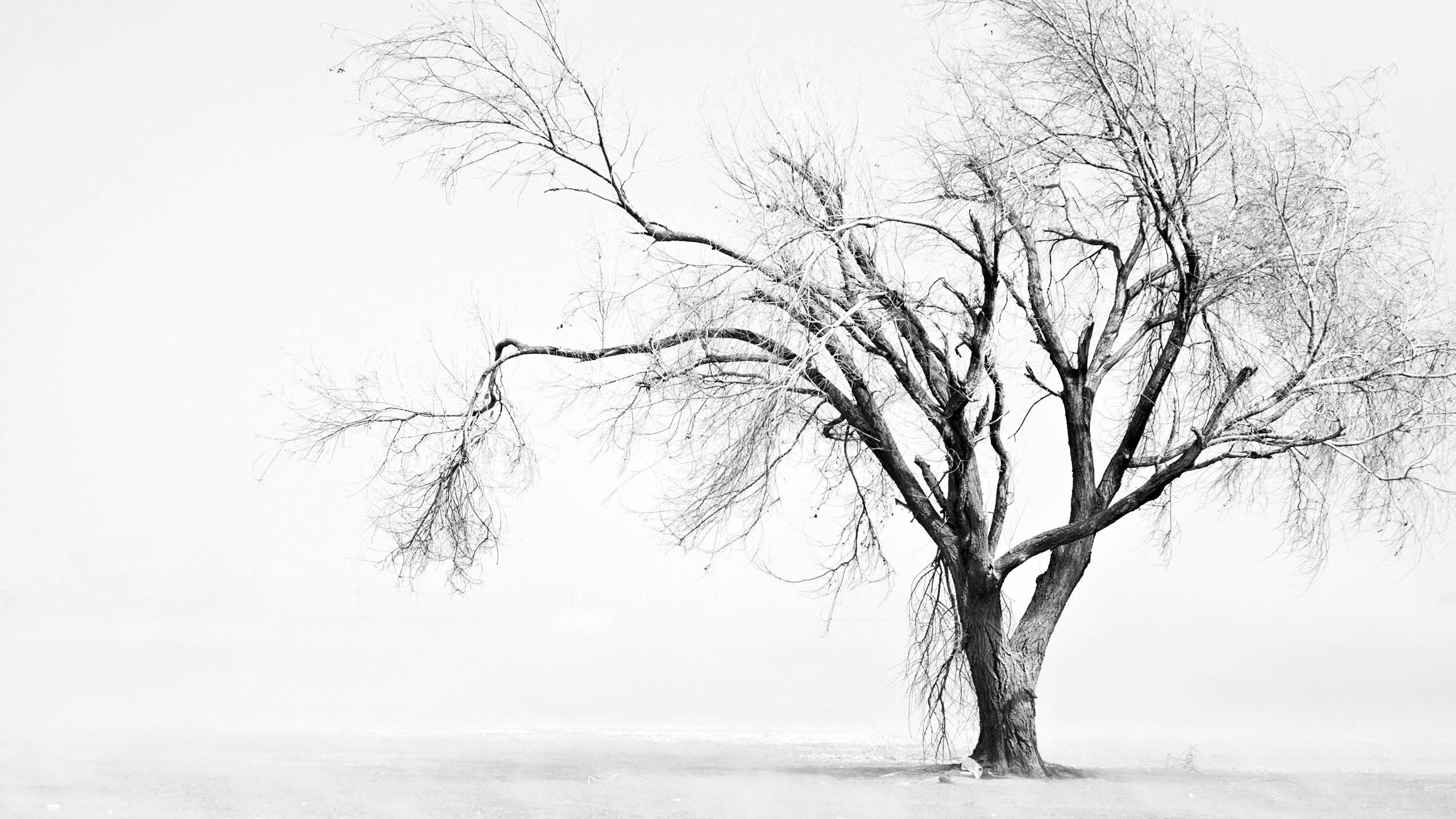 black and white trees wallpaper