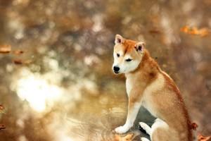 dog wallpaper lovely