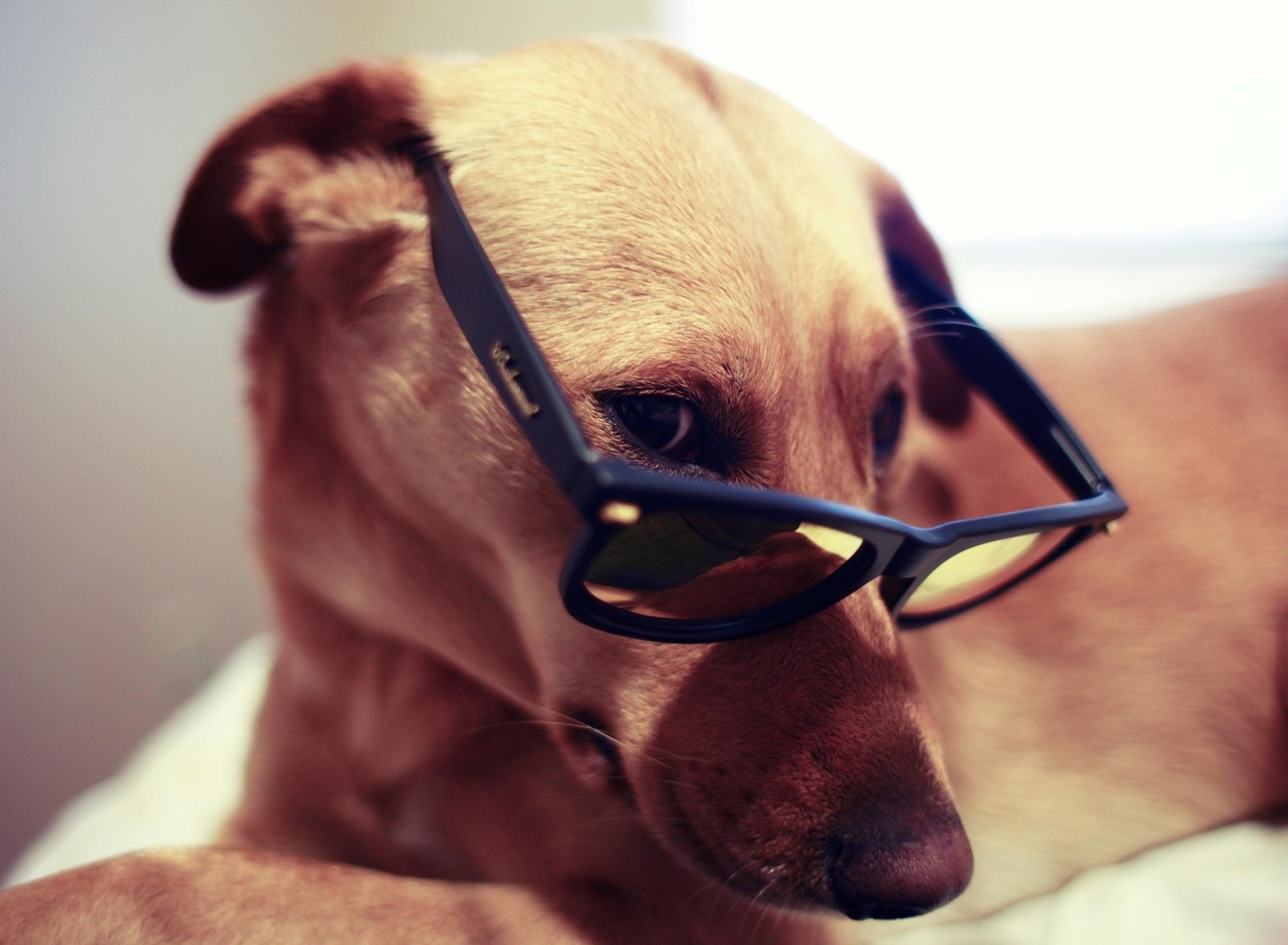 dog wallpaper stylish