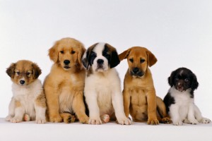 dog wallpapers cute desktop