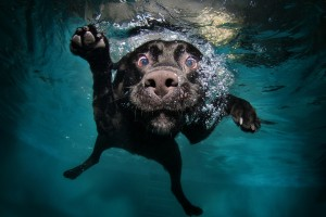 dog wallpapers water