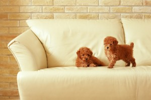 dog wallpapers widescreen